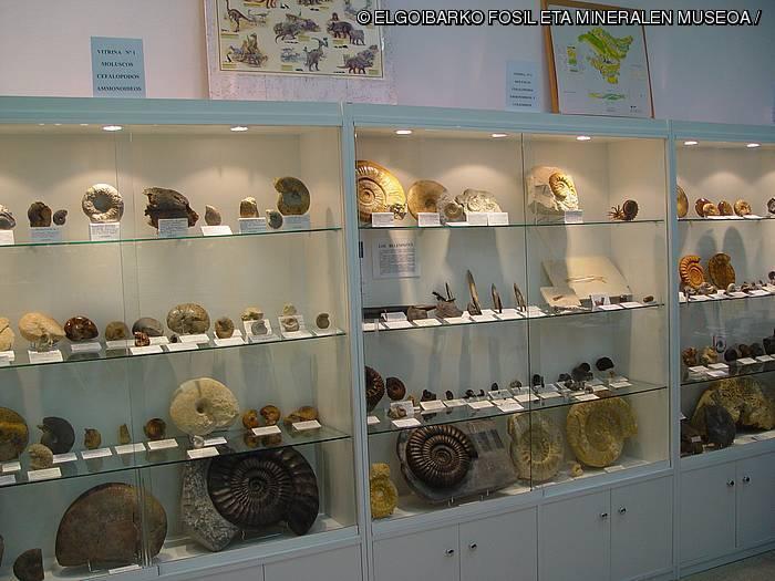 [Museora] Fosil eta Mineralen Museoa. Harrien miresmenetik