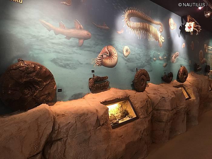 [Museora] Nautilus Ikasgune Geologikoa. Amoniteen erresuma